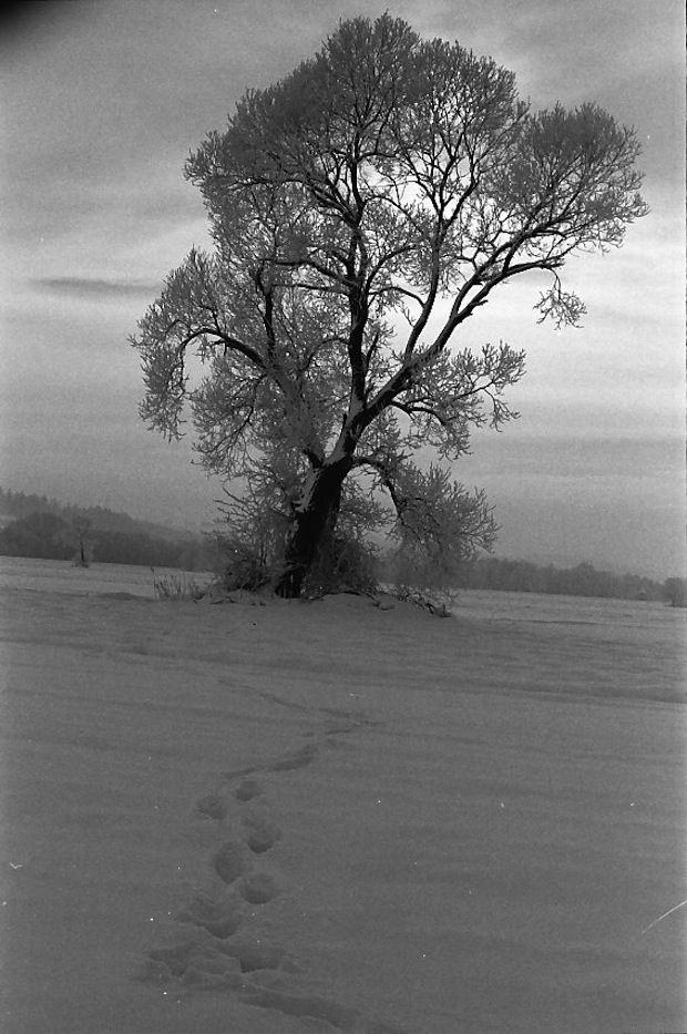 Winter  - ECHT HÜBSCH