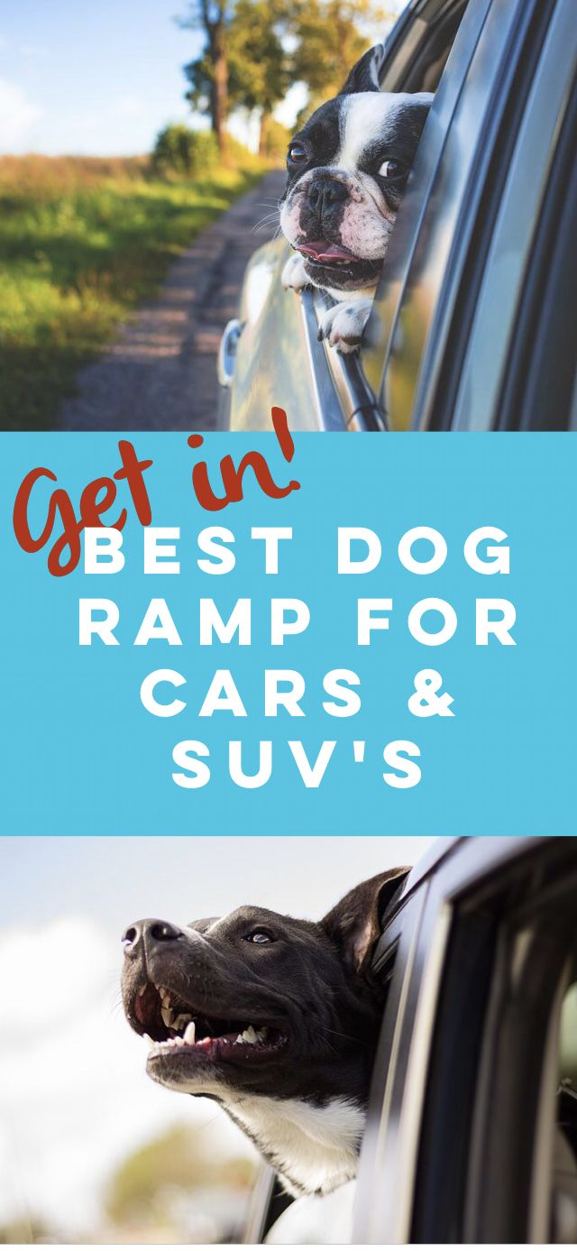Best 25 dog ramp for car ideas on pinterest pet steps dog rooms and dog car ramp
