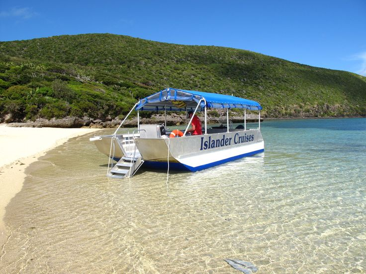 Take a North Bay Turtle and Nature Tour  www.lordhoweisland.info