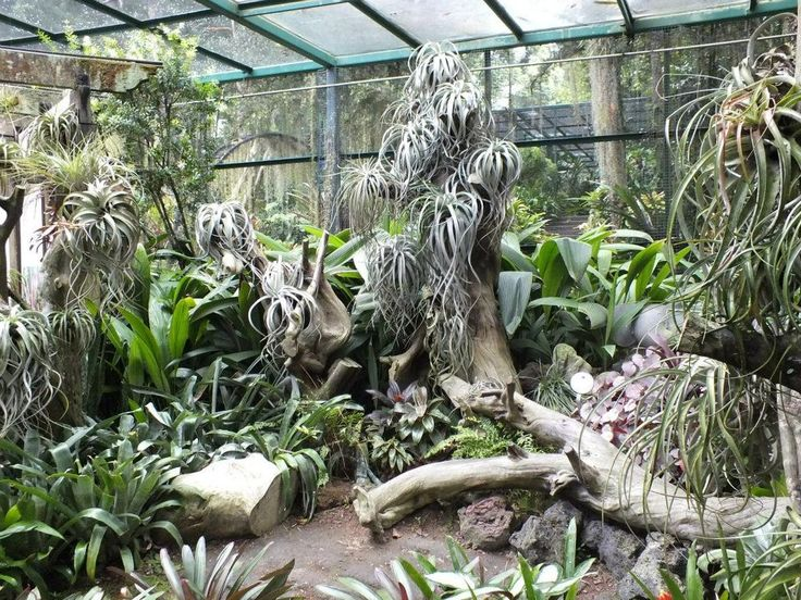 Bromeliad Collection Singapore Botanical Garden