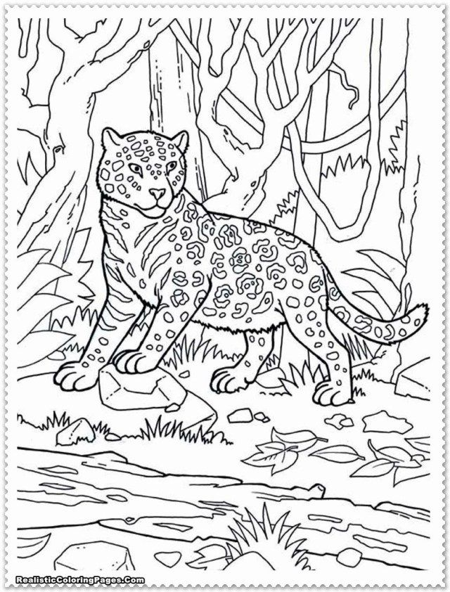 Brilliant Picture Of Jungle Animal Coloring Pages Entitlementtrap Com Zoo Animal Coloring Pages Zoo Coloring Pages Jungle Coloring Pages