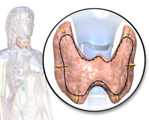 Alimenti che migliorano il funzionamento della tiroide - Ambiente Bio