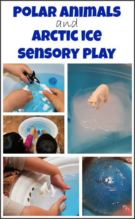 Polar animals and Arctic ice - teaching kids about Arctic animals and Arctic ice through sensory play || Gift of Curiosity