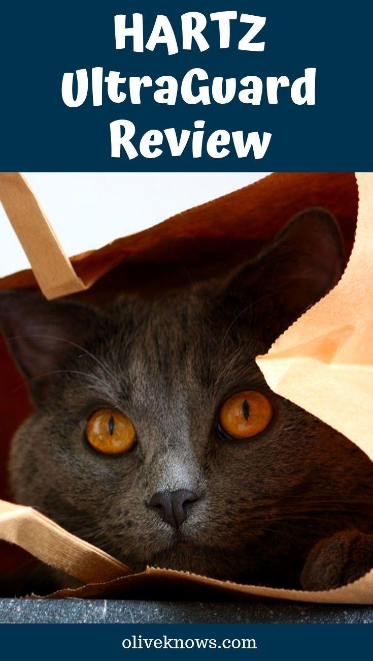 Hartz Ultraguard Review Oliveknows Cat Fleas Cat Safety Sick Cat