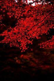 #anthropology #autumn #vibe #leaf