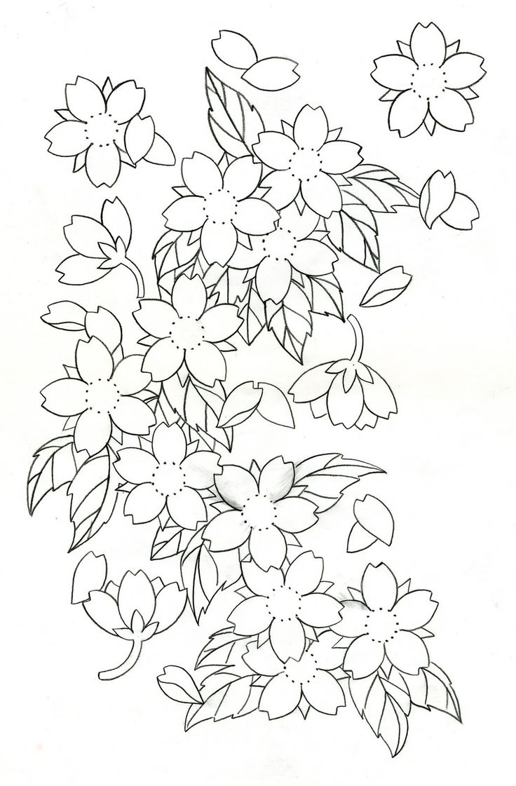 Line Drawing Flowers Blossom : Cherry blossom tattoo designs blossoms disigin
