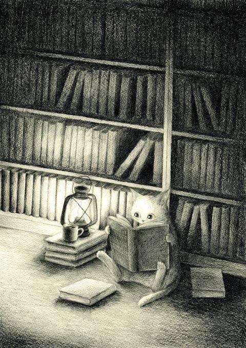 Libreria in penombra con gatto.