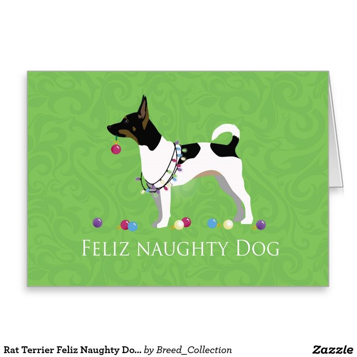 66 Best Rat Terrier Gifts By Breed Collection Images On