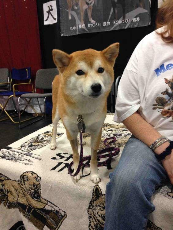 B Named Dog Breeds
