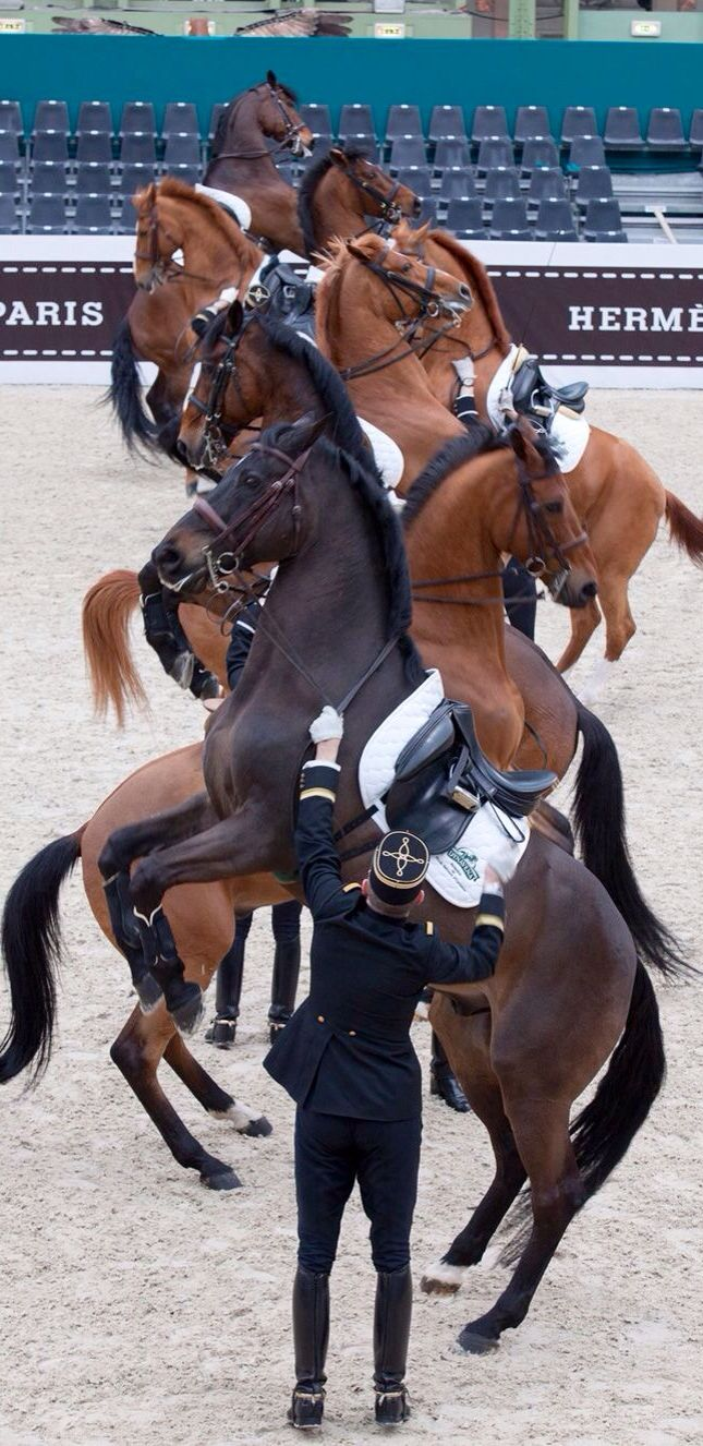 Equine performance- this such an amazing shot! and the horses are beautiful!!