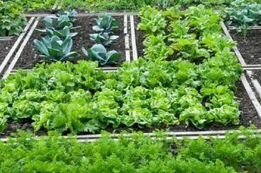 Come progettare un orto - Fai da Te Mania