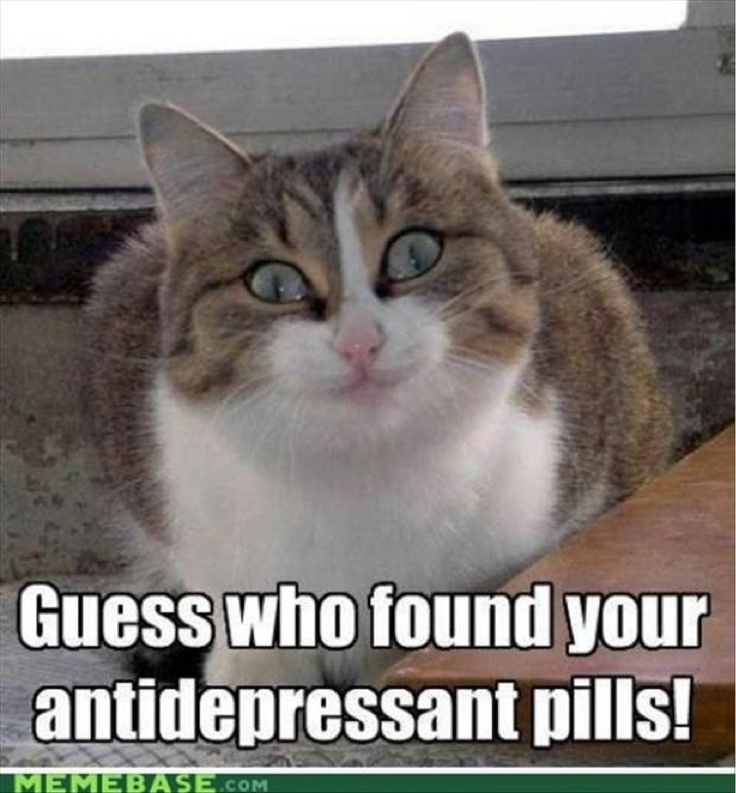 No more Antidepressant pills for kitty!