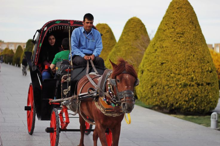 The biggest attraction of #Isfahan - horses :)