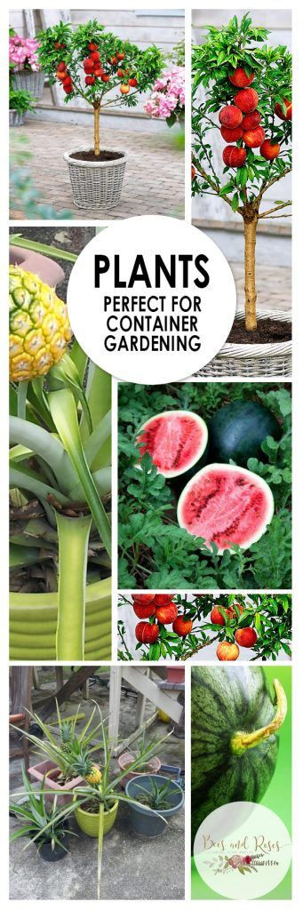Plants Perfect for Container Gardening| Container Gardening, Container Gardening Tips and Tricks, Plants for Container Gardening, Gardening 101, Indoor Gardening, Indoor Gardening Hacks, Popular Pin