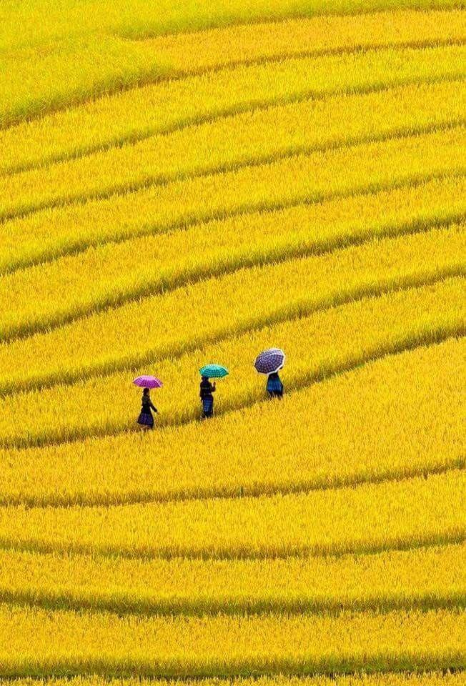 Pin Af Lois Snavely Pa Mellow Yellow Med Billeder Billeder Smukke Billeder Malerier