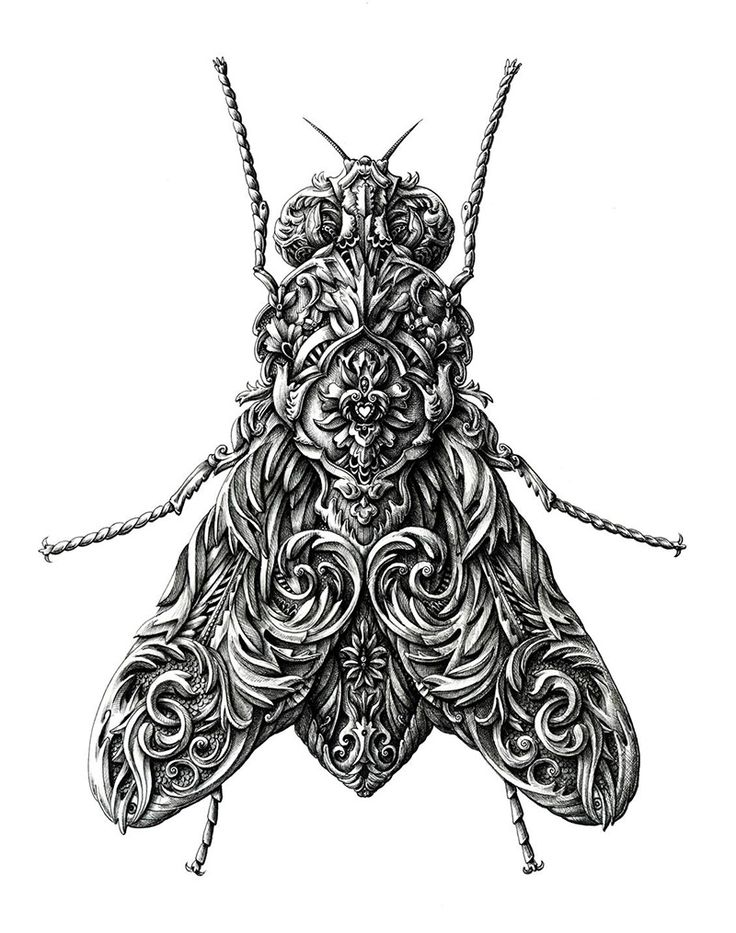 Ornate Insects Drawn by Alex Konahin