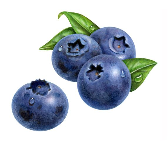 watercolor paintings of blueberries | This label was for blueberry jam.