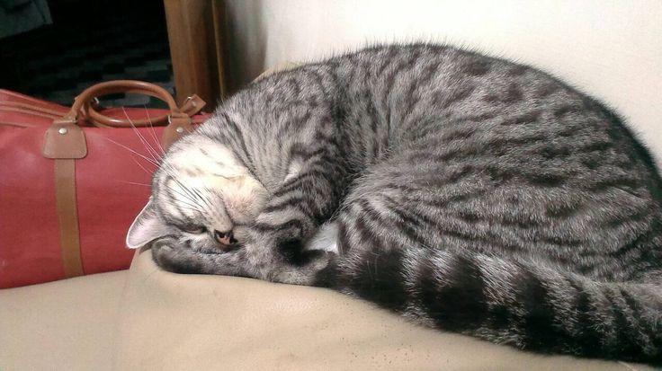 Sleeping and doing some yoga