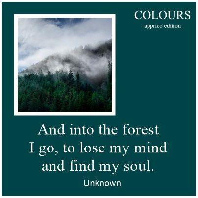 """Ich ging in die Wälder... sagte schon Henry David Thoreau.  """"Black Forest"""" der dunkelste HOLZ-Ton der appricoCOLOURS zeigt das Mysterium rund um den tiefen Schwarzwald sehr gut.  Mehr Infos?"""