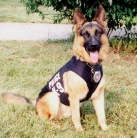 July 29, 11am at Orlando Public Library: Orlando K-9 Police Unit; Get a glimpse of a dog's life and meet a special furry friend from the Orlando Police K–9 unit. Ages 6-12. Seating is limited for some events. Please call 407.835.7323 to register in advance.