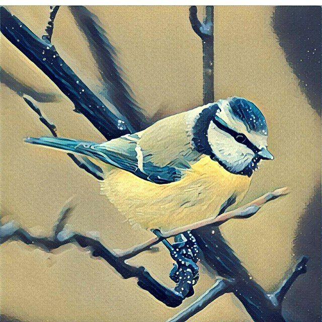 I made #popart out of an old photo of mine🤓  Blue Tit - Blåmes #bird #birds #birdwatching #birders #fågel #animal #animals #pajaro #august #vogel #ptica #djur #beauty #fågelskådning #naturen #nature #picoftheday #mittinaturen #nationalgeographic #summer #canon #wilderness #hiking #blue #yellow #outdoors #art #audubon #wildlife