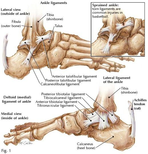 During a traumatic injury like a serious ankle sprain, the nervous system usually protects the area by shutting off various muscle groups. Proper muscle re-activation will be needed in order for full recovery to occur. It's important to remember that the area is not yet recovered just because it's pain-free. Full recovery means that all of the muscles are re-activated and full function is restored.