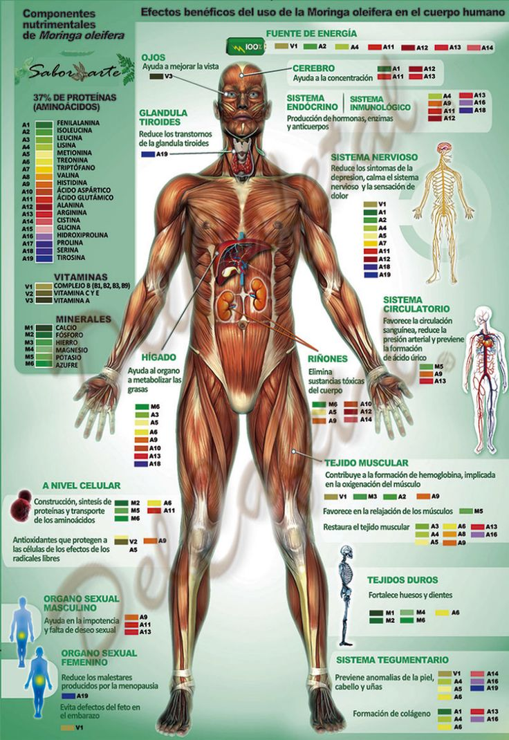 Superalimentos: Beneficios del Consumo de Moringa