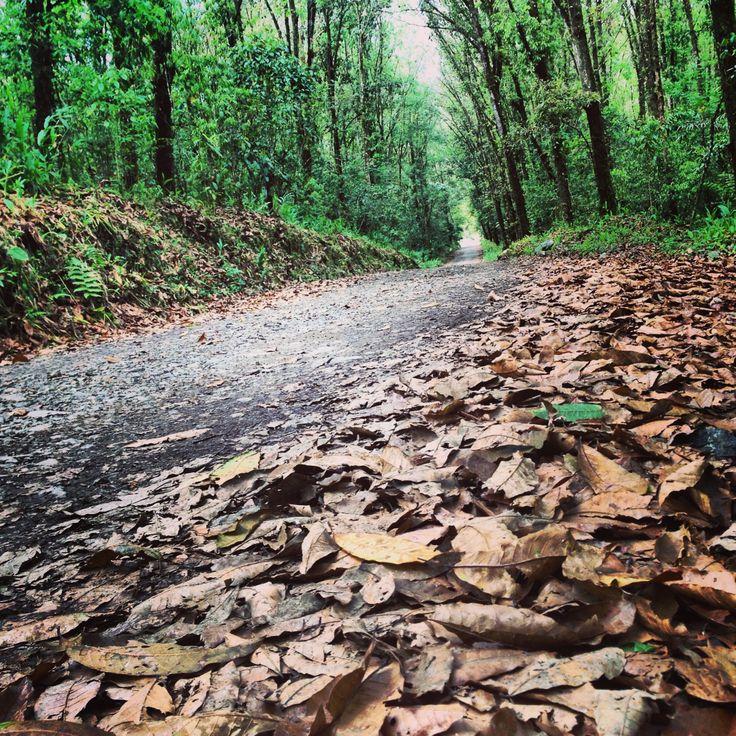 Camino a El Cedral - Pereira, Colombia #Ciclomontañismo