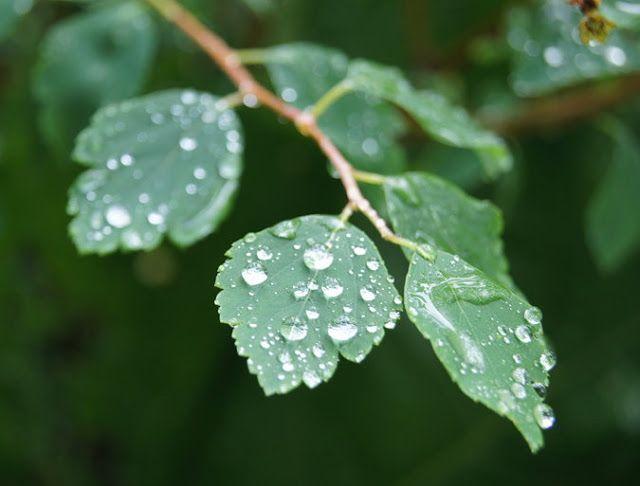 PiaK: Efter regn...