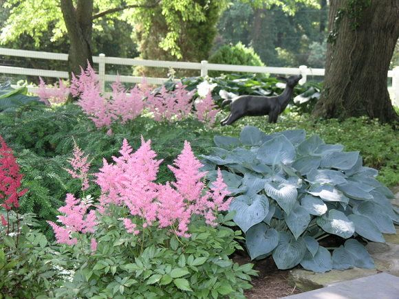 38 best SHADE GARDEN WOODS EDGE images on Pinterest Shade garden