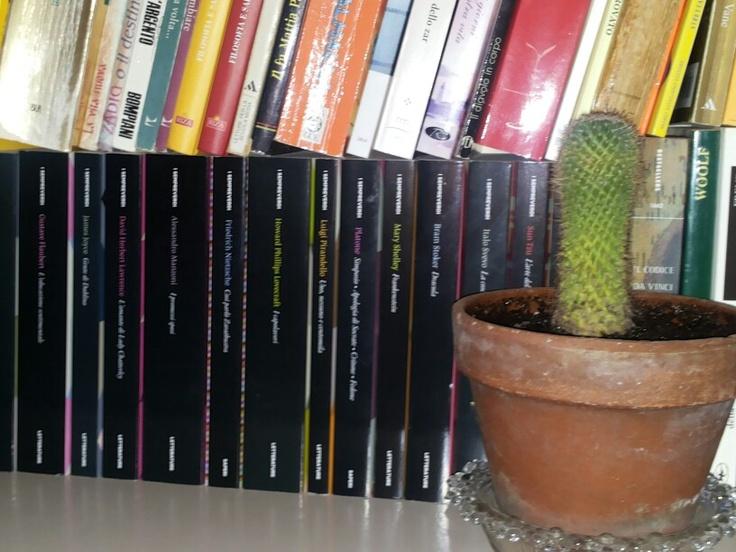 il mio cactus :)