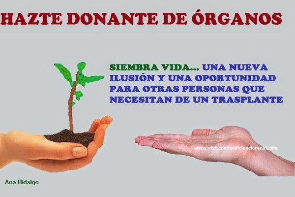 infant organ donation essay