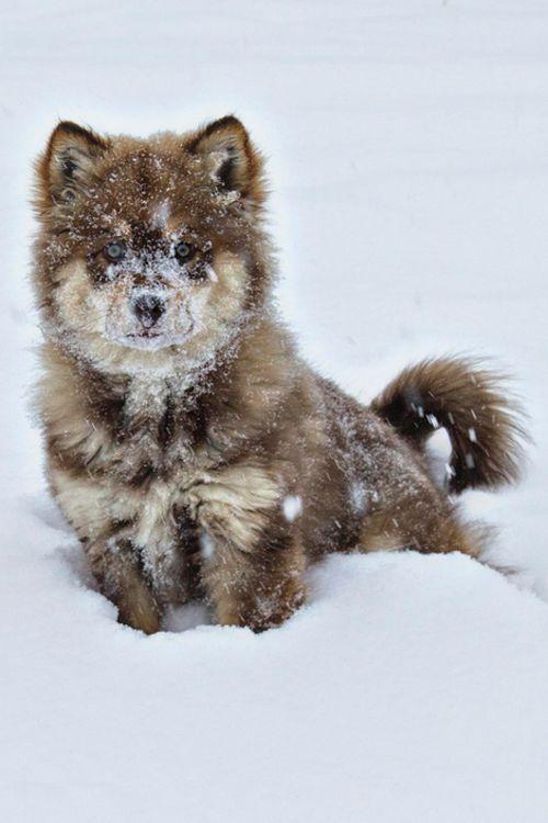 Im Schnee herumtollen macht richtig Spaß - vor allem mit Hund! #schnee #welpe #spaß