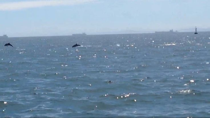 #Dolphins #CapeTown, #SouthAfrica