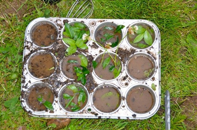 "Muffin trays in the outdoor kitchen ("",)"