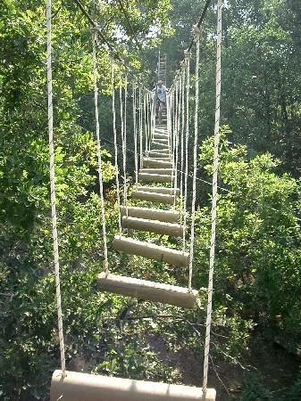 Parc Anjou aventure. Rope course outside of Angers, France. Do you step on it or swing to each one with your hands?