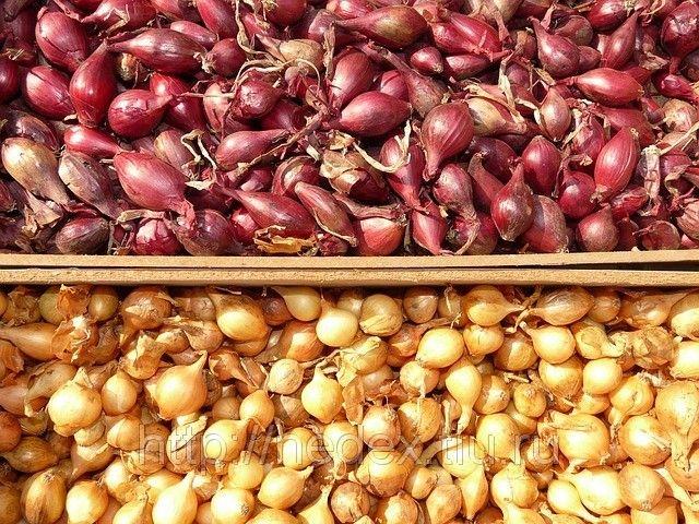 [ad#content] Покупала я у одной бабушки семена лука не чернушку, а уже маленькие луковички, тут сорт не имеет значения. И [...]