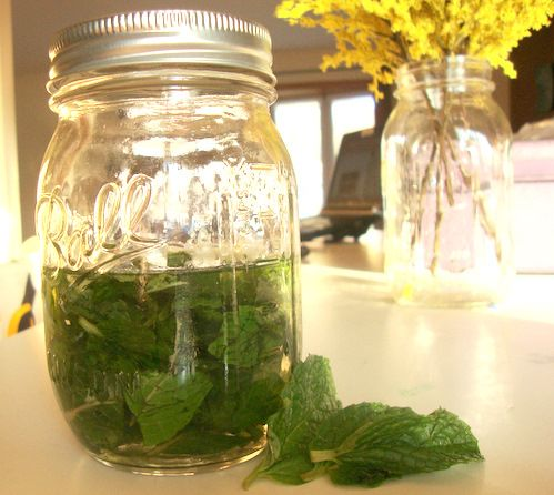 Homemade Mint Extract. Now I know what to do with that peppermint plant I got for Christmas!
