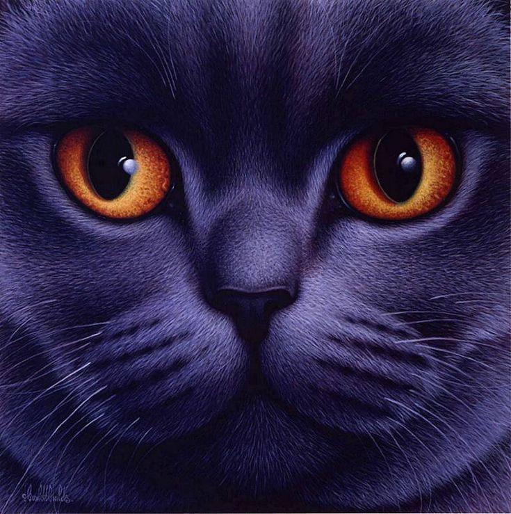 картинки кошек на аватар сми также