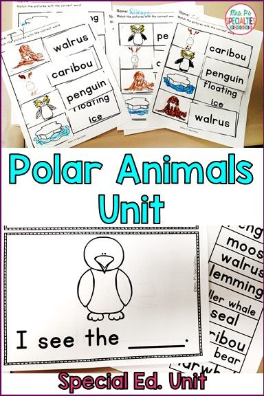Target vocab, reading and writing while learning about polar animals. This unit is so helpful with students with autism or other disabilities that need a lot of visual supports. Perfect for my self-contained classroom!!