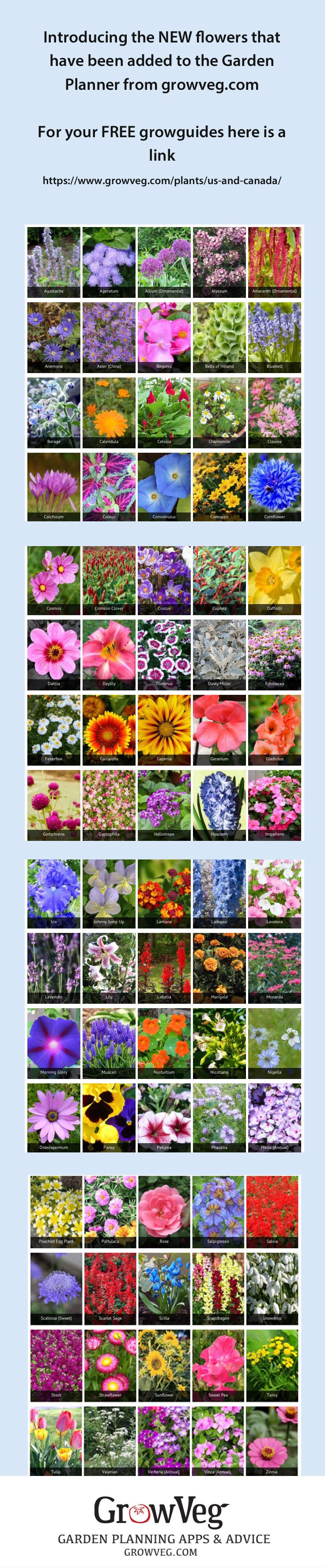 337 best companion planting and pollinators images for Canadian gardening tips