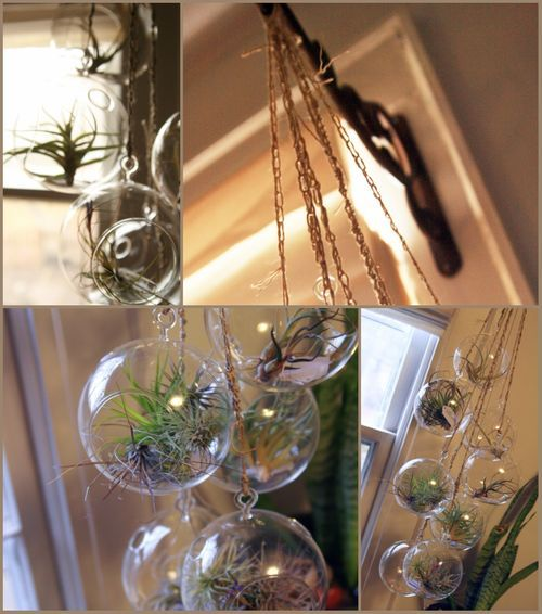 Air plant display so cool i made one for my bathroom for Cool diy chandeliers