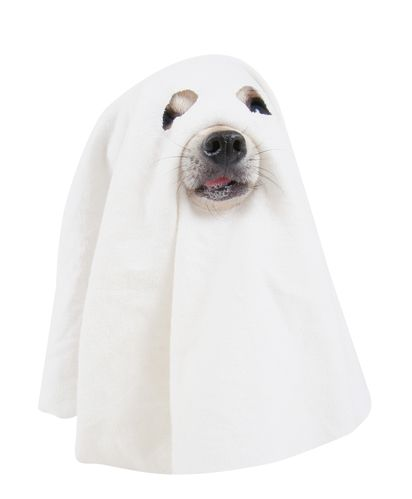 #Pettiquete101: The best #costumes for your #pet