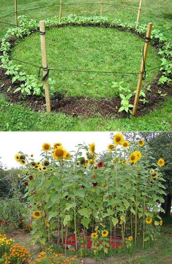 25 best ideas about School gardens on Pinterest Plant crafts