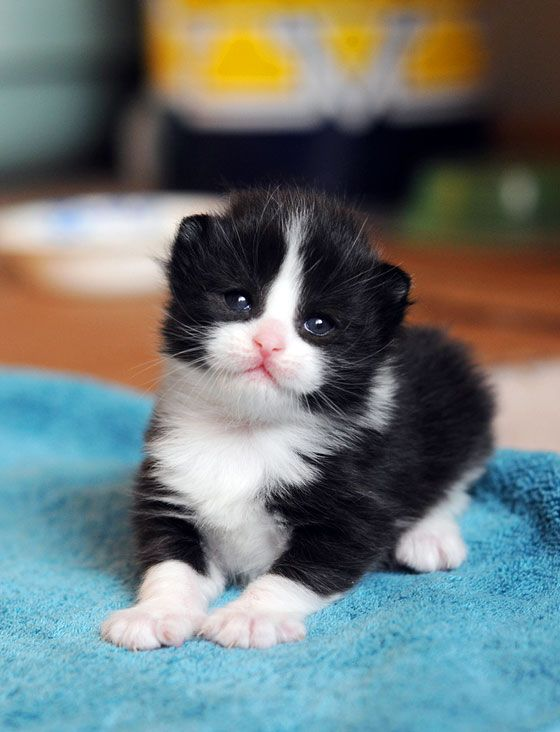 Sophie must have looked like this kitty when she was a baby! Meow...
