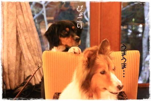 http://ameblo.jp/annponnmarine/entry-12136282961.html