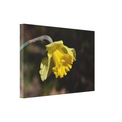 "Pretty Yellow Daffodil Flower 24.00"" x 16.00"" Canvas Print - floral style flower flowers stylish diy personalize"