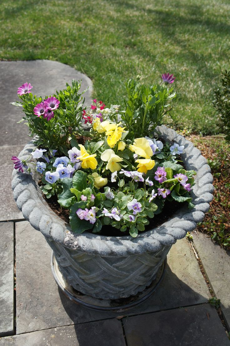 The 52 best spring container ideas images on pinterest container mixed spring planter mightylinksfo
