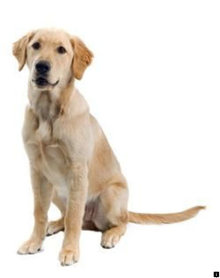 Discover More About Labrador Click The Link To Find Out More