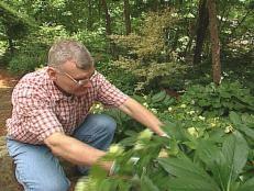Flowering Shrubs for Shade Gardens | Types of Trees and Shrubs | HGTV